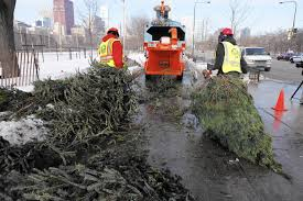 chicagoans can recycle christmas trees at park district sites