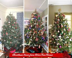 live christmas trees why you should buy your real christmas tree online and vendor
