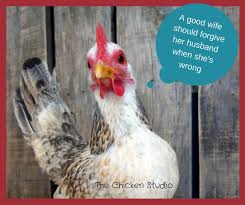 Funny Chicken Memes - 125 best chickens memes from the chicken studio images on pinterest