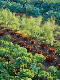 vegetable garden layout vegetable garden plans diy
