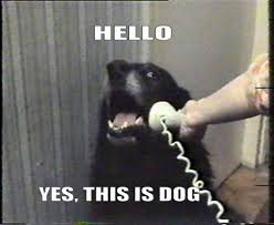 Dog Phone Meme - yes this is dog know your meme