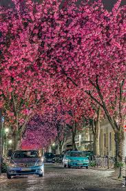 cherry blossom tree 15 of the world u0027s most beautiful tree tunnels and how to get