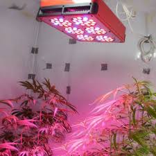 led lighting over house plants grow lighting for your indoor