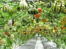 small vegetable garden layout pinterest vegetable garden designs
