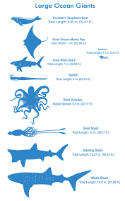 see how you size up against the biggest animals in the sea takepart