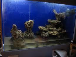 Saltwater Aquascaping Reef Workshop Salt Water Reef Tank In Wall Contruction