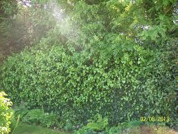 neighbours fence gardening forum gardenersworld com