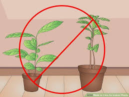 How To Save A Dying Plant How To Care For Indoor Plants 15 Steps With Pictures Wikihow