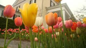 fertilizing flowering bulbs