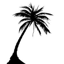 silhouette palm tree design tree