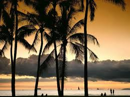 Palm Tree Wallpaper Full Hd Pictures Palm Tree 615 32 Kb