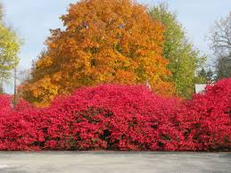 buy native grow native indiana friesner herbarium blog about indiana plants timely seasonal