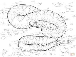sonoran desert sidewinder coloring page free printable coloring