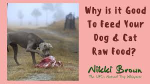 raw food for dogs uk best food 2017