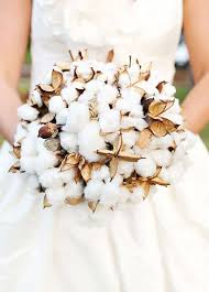 cotton flowers a bouquet of cotton resembles light and fluffy snow it