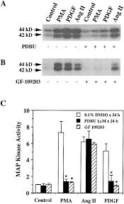 angiotensin ii stimulates map kinase kinase kinase activity in