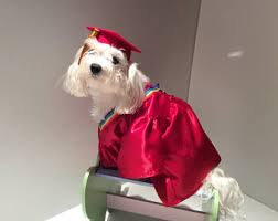 dog graduation cap and gown graduation gown etsy