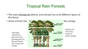 Plants That Dont Need Light Land Biomes Temperate Deciduous Forests Rainfall Inches