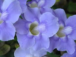Purple Flower On A Vine - purple flower on vine 50 cent photo