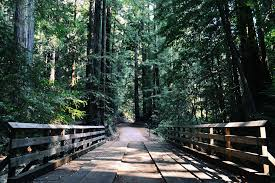 free photo wood walkway trees forest park path forest trees max
