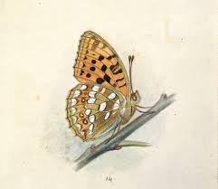 growing more butterflies in south east queensland gecko hills to natureplus library u0026 archives