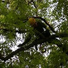 majestic tree care tree services minneapolis mn