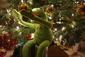 free images branch green frog tree