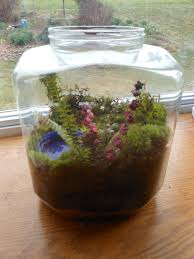 recycled containers labels on labels off moss terrarium