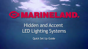 Resume Accent Marineland Hidden And Accent Led Lighting System Pet Supplies