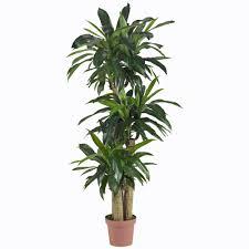 dracaena amazon com nearly natural 6584 corn stalk dracaena decorative