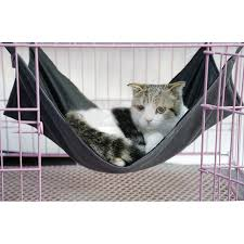 compare prices on pet black rats online shopping buy low price