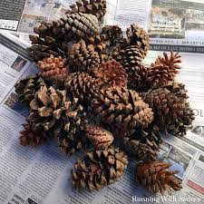 white pine cone make your own pine cone succulents running with sisters