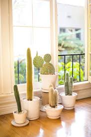 simple beauty indoor pot planter ideas offering various pot sizes