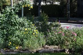 49 best california native plants native plant garden tour weeding wild suburbia