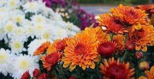 Gardening Tips For Summer - ask wet u0026 forget late summer gardening tips for the home gardener