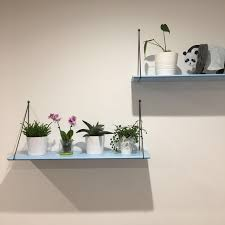 first garden houseplants bring the outside in