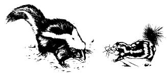 skunks and the management of skunk damage
