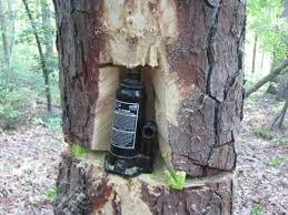 Felling Wedges Felling A Tree Poorly