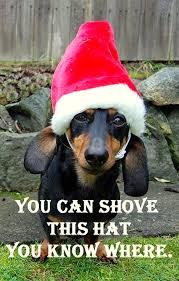 Christmas Dog Meme - dogs who are so over christmas