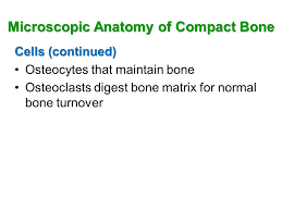 Normal Bone Anatomy And Physiology The Skeletal System Structure And Functions Ppt Video Online