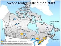Quebec Canada Map Geographical Distribution Of Swede Midge