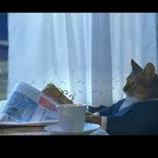 Thinking Cat Meme - thinking cat meme generator