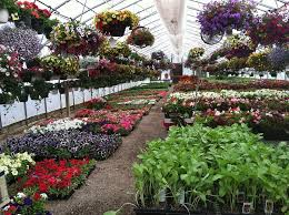 Types Of Vegetables To Grow In A Garden - growing plants in a greenhouse u2013 suitable plants for greenhouse