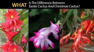 17 besten cacti bilder auf saftig gardening
