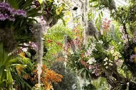 Botanical Garden Orchid Show Orchid Show At Ny Botantical Gardens Hirschamy Hirsch