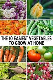 haha forget you pesticides vegetable gardening pinterest