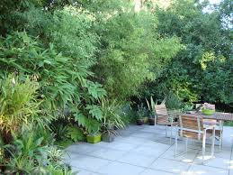 bamboo privacy screen parking lot google search permaculture