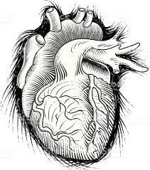 human heart sketch stock vector art 97403767 istock