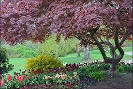 Different Types Of Japanese Gardens - crimson queen japanese maple