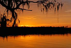 Louisiana scenery images Photo gallery louisiana wolf 39 s vision nature photography jpg